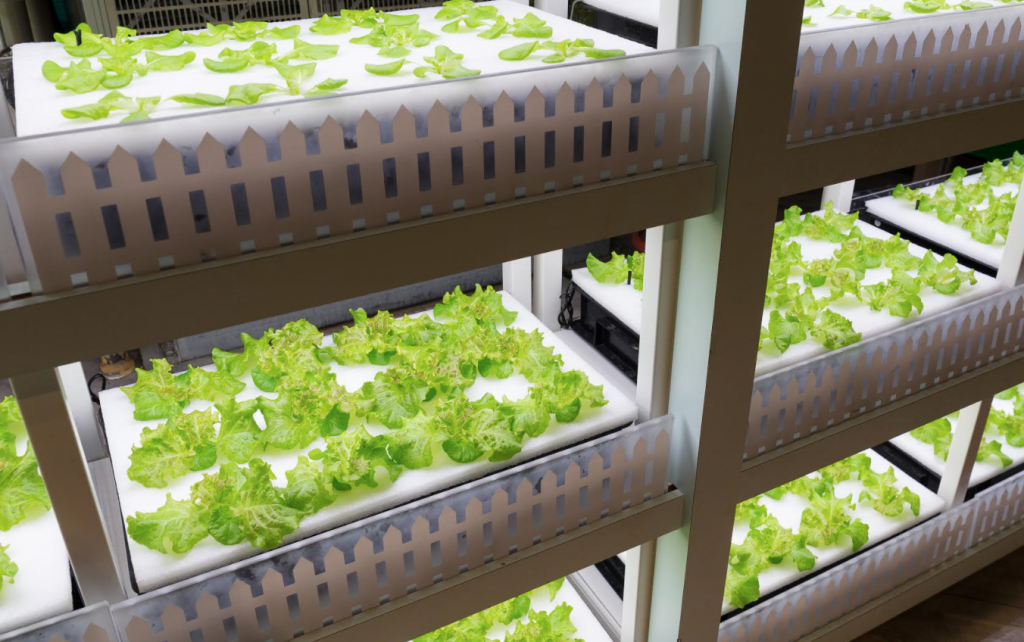 Vertical Farming Can Bring Sustainability and Steadiness to the Supply Chain_v2